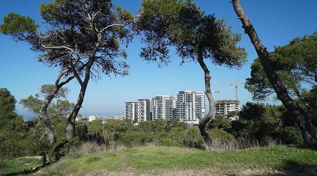 טבע עירוני בחיפה סביוני דניה - מבט מהכרמל